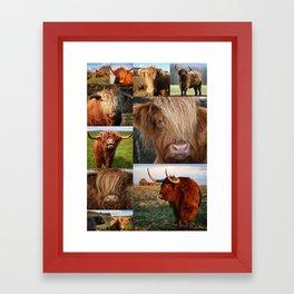 Highlander - Highland Cows - Highland Cattle Framed Art Print