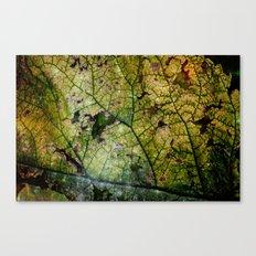 Dark leaf Canvas Print