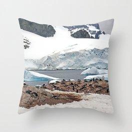 Gentoo Penguin Colony Throw Pillow