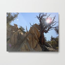 Tree leaning on rock Metal Print