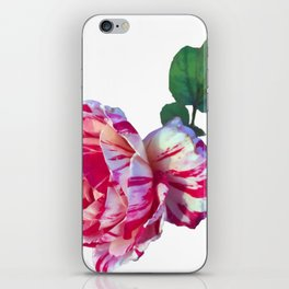 red whtie rose flower photograph take 2 iPhone Skin