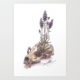 Raccoon Skull Art Print