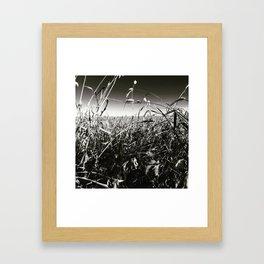 Cornfield Number 2 Framed Art Print