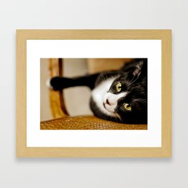Cat On Chair Framed Art Print