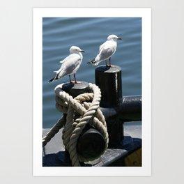 Seagulls on a Bollard at the Docks Art Print