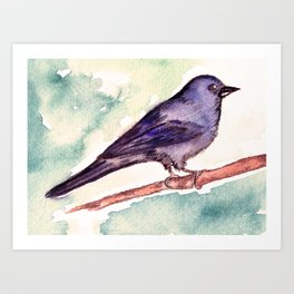 Pinzon azul Art Print
