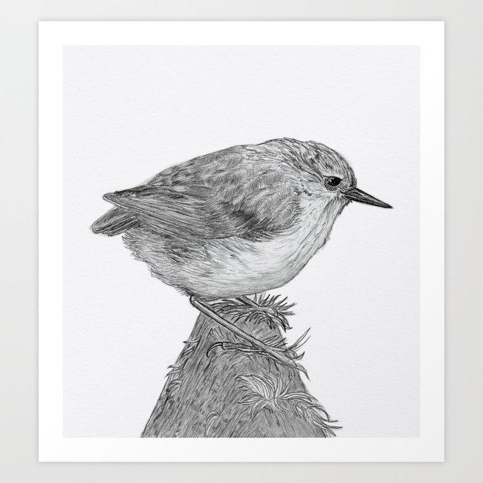 Rifleman - New Zealand Native Bird Art Print