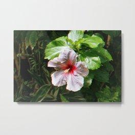 Hawaiian Flower Metal Print