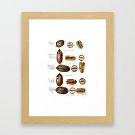 Nuts - Fruit Illustration Framed Art Print