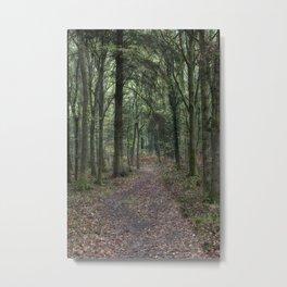 Footpath through the Oaks Metal Print