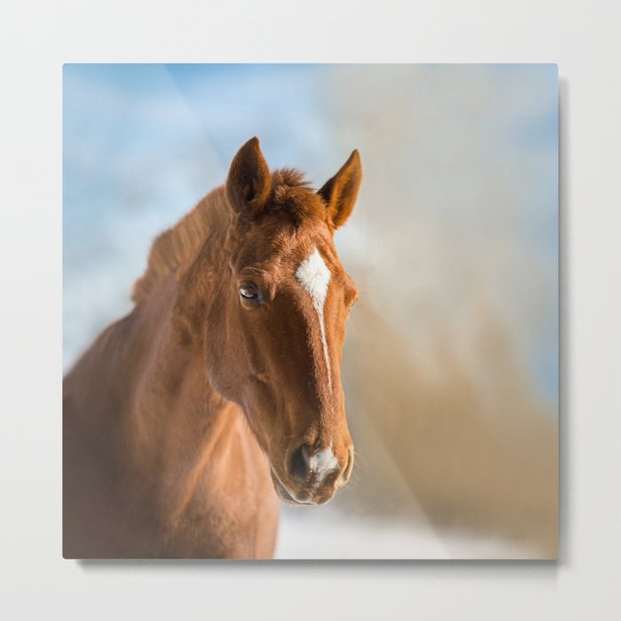 Brown Horse Winter Sky Metal Print