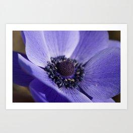 Blue Crown Anemone Art Print