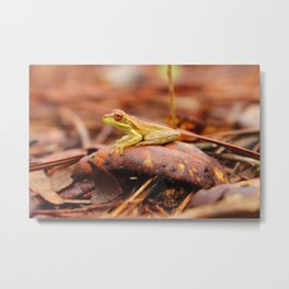 Cuban Tree Frog Metal Print