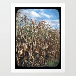 Corn About Ready to Harvest Art Print