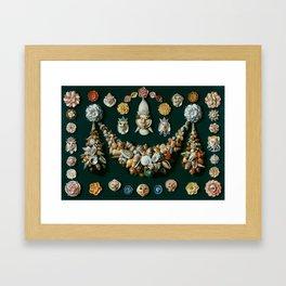 """Jan van Kessel de Oude """"Festoon, masks and rosettes made of shells"""" Framed Art Print"""