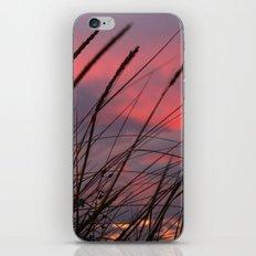 Sunset through the Reeds iPhone & iPod Skin