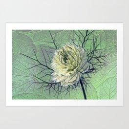 love-in-a-mist Art Print