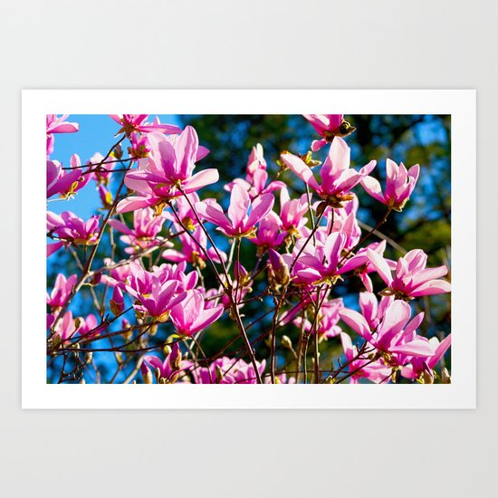 Pink Flowers In The Sun Art Print