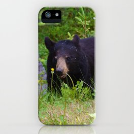 Black bear munches on some dandelions in Jasper National Park iPhone Case