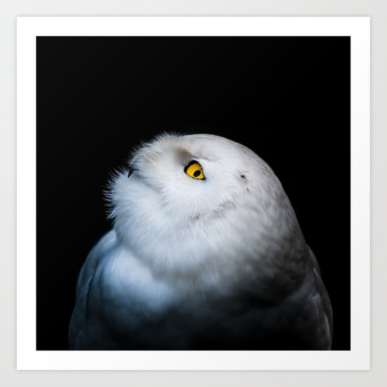 Winter White Snowy Owl Art Print