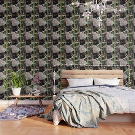 Juvenile Black Crowned Night Heron Wallpaper