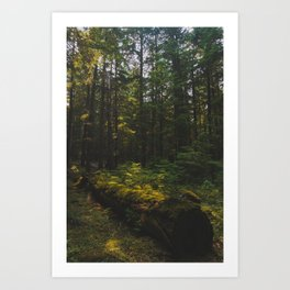 Mt Hood National Forest - Pacific Crest Trail, Oregon Art Print