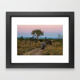 A Rhinoceros and a Sunrise in South Africa Framed Art Print