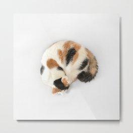 Sleeping Calico Cat Metal Print
