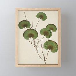 Kidney Fern Framed Mini Art Print