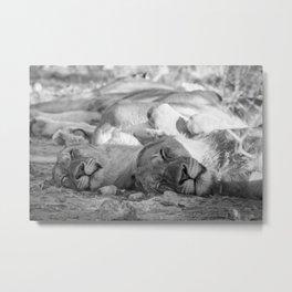 B&W Cat Nap Metal Print