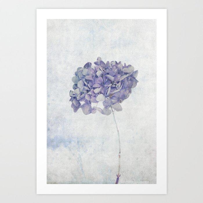 Blue Vintage Hydrangea Art Print