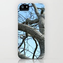 Winter Tree in Beverly, MA iPhone Case