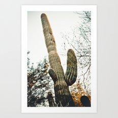 Desert Botanical Gardens Saguaro Art Print