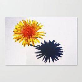 Dandelion and Shadow Canvas Print