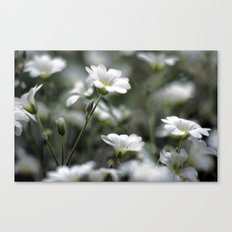 Snow In Summer Canvas Print