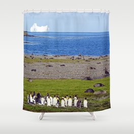 King Penguins on the beach with an Iceberg behind Shower Curtain