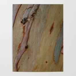 Eucalyptus tree bark Poster