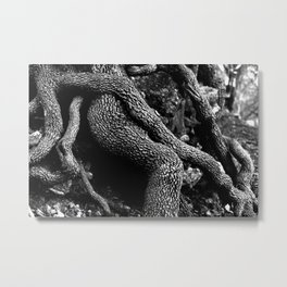 Forest Finds #2 Metal Print