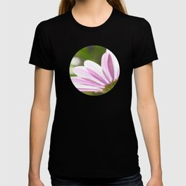 Pink African Daisy in the Light T-shirt