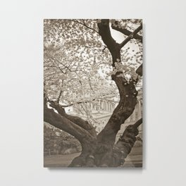 Cherry Blossoms in bloom at Capitol Building :: Washington DC Metal Print