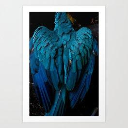 Macaw - Canaima - Venezuela Art Print