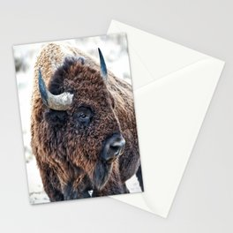 Bison the Mighty Beast Stationery Cards