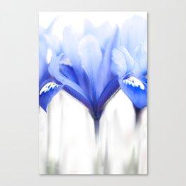 Blue Iris 1 Canvas Print