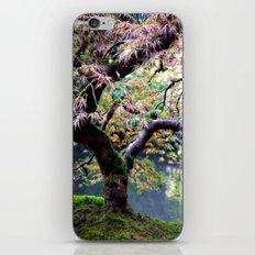 Autumn Maple iPhone & iPod Skin