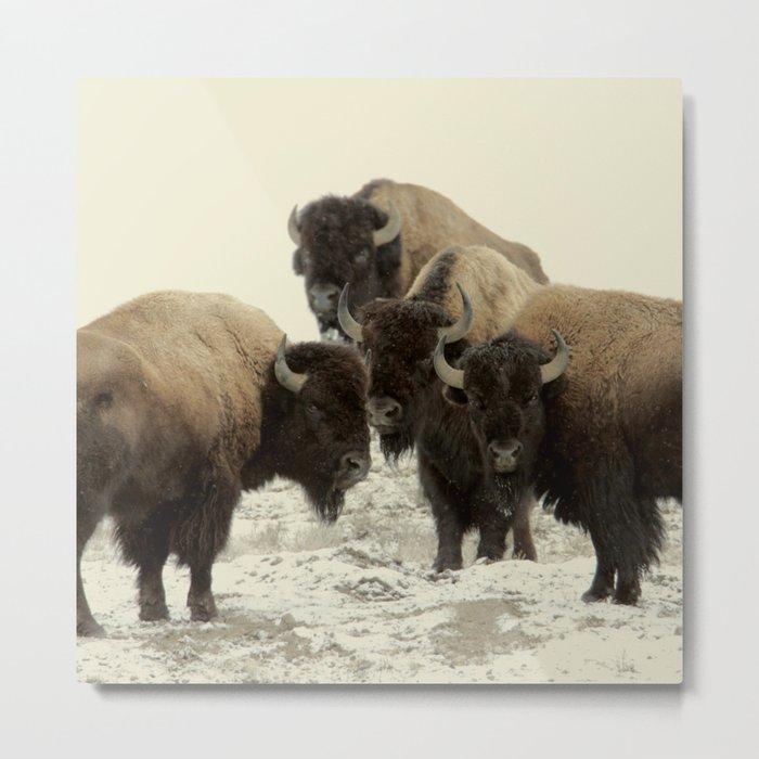 American Buffalo Metal Print