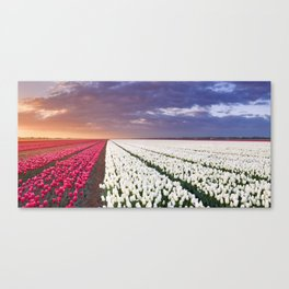 II - Rows of colourful tulips at sunrise in The Netherlands Canvas Print