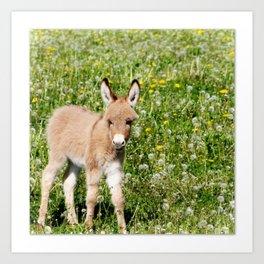 Donkey Baby  Art Print