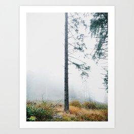 Tree Trunk Lost in The Fog Art Print