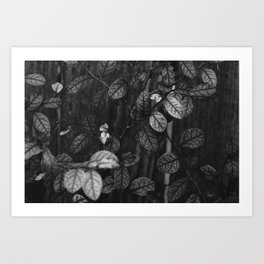 Leaves & Branches Art Print