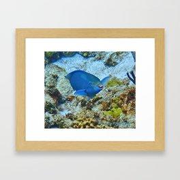 Smiling Parrotfish Framed Art Print
